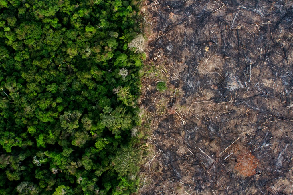 deforestation-aerial-1562186048