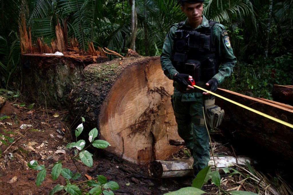 illegal-logging-01-1562184692