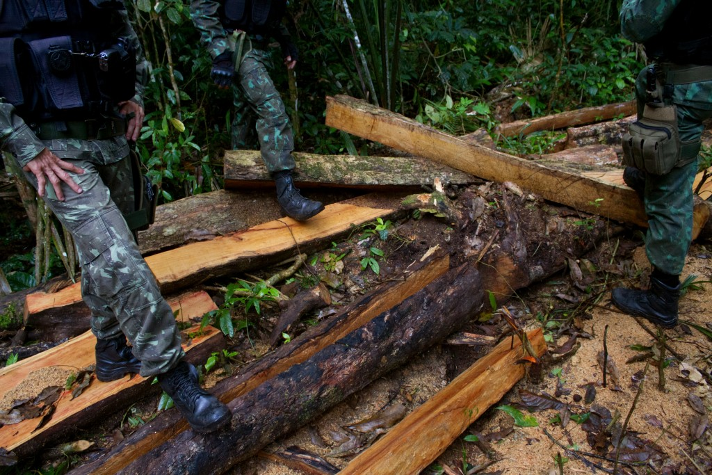 illegal-logging-02-1562184675